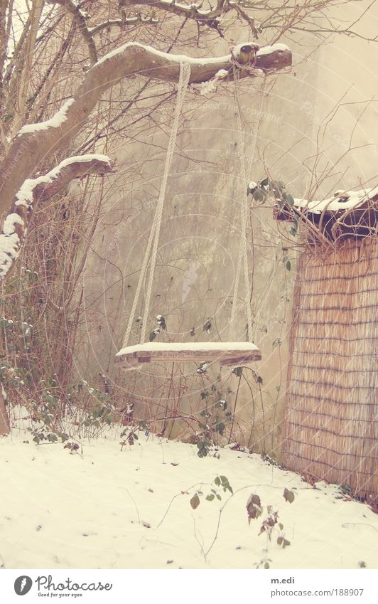 Old Tree Snow Playing Garden Swing To swing