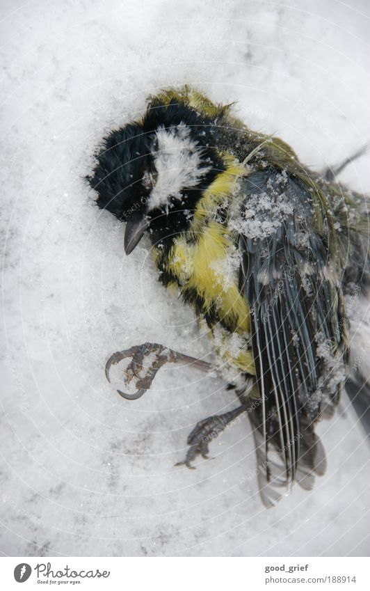 Macro (Extreme close-up) Winter Animal Cold Death Cat Bird Lie Wing Zoo Animal portrait Wild animal Beak Pole Tit mouse