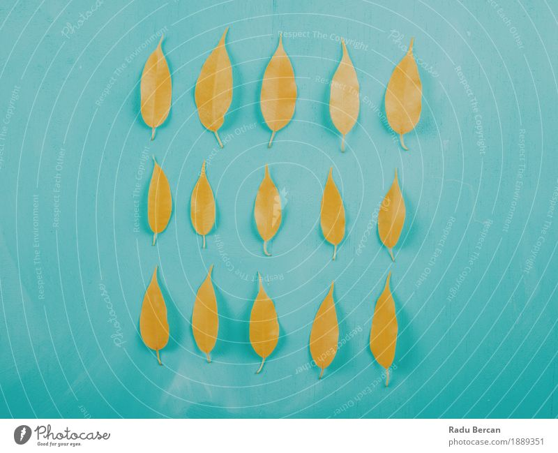 Yellow Autumn Leaves On Turquoise Wood Table Decoration Environment Nature Plant Leaf Natural Blue Multicoloured Emotions Colour shaped Object photography