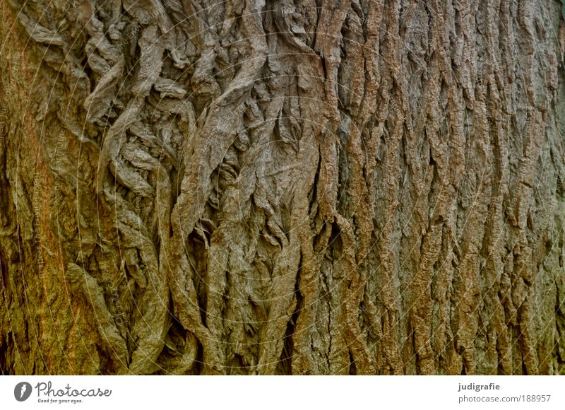 skin Nature Plant Tree Old Uniqueness Natural Brown Power Protection Skin Tree bark Rough Dry Wood Colour photo Exterior shot Structures and shapes
