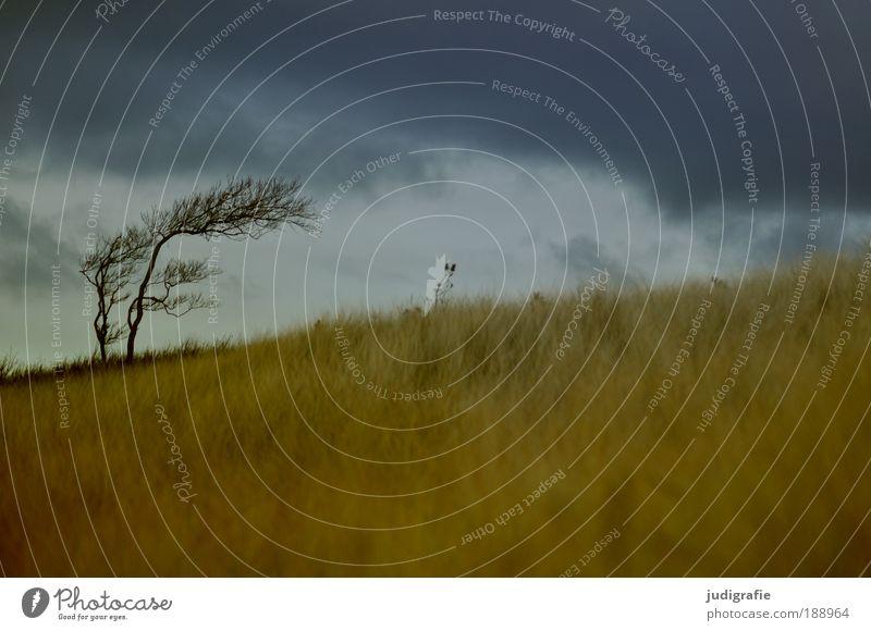 Nature Sky Tree Ocean Plant Beach Clouds Dark Grass Landscape Coast Wind Environment Threat Climate Gale