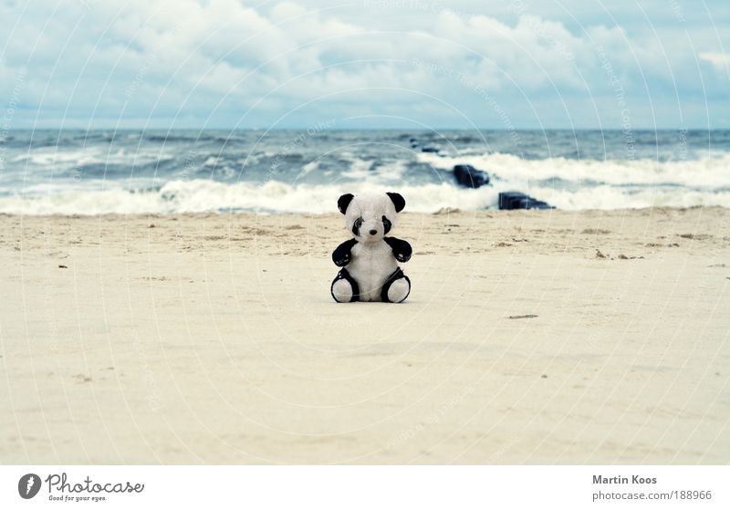 Nature Bear Beautiful Ocean Beach Vacation & Travel Animal Loneliness Playing Small Trip Trust Toys Infancy Cute Surprise