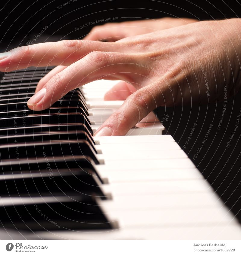 play the piano Leisure and hobbies Music Human being Hand 1 Piano Joy playing hands old tool Maldives player Musical older keys black caucasian white