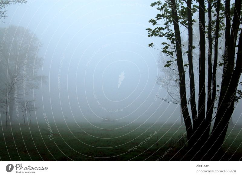 Tree Calm Loneliness Forest Autumn Meadow Park Landscape Moody Fog Romance Longing Serene Wanderlust Homesickness Attentive