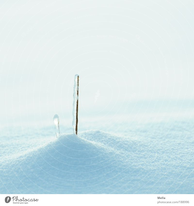 Nature White Blue Plant Winter Calm Cold Snow Grass Ice Bright Weather Environment Growth Frost Stand