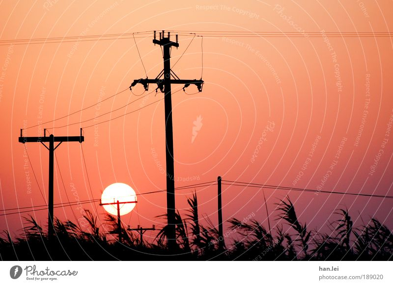 Summer Energy industry Electricity Technology Communicate Cable Telecommunications Christian cross Common Reed Electricity pylon High voltage power line