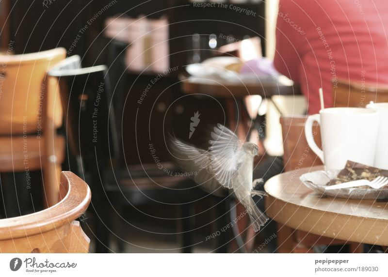 Animal Movement Flying Bird Wild animal Nutrition Back Table Speed Observe Cute Curiosity Chair Gastronomy Discover Restaurant