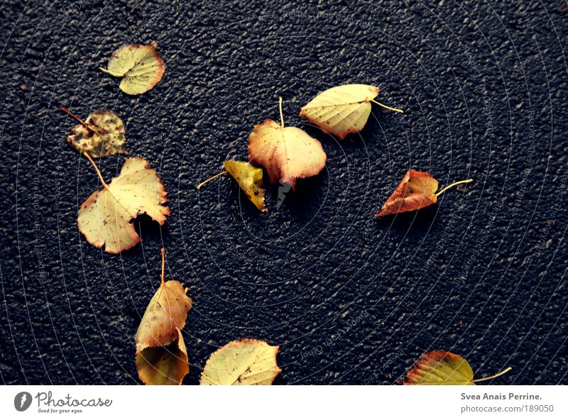 Nature Blue Leaf Yellow Street Cold Autumn Environment Moody Park Lie Asphalt To fall Stalk Past Boredom