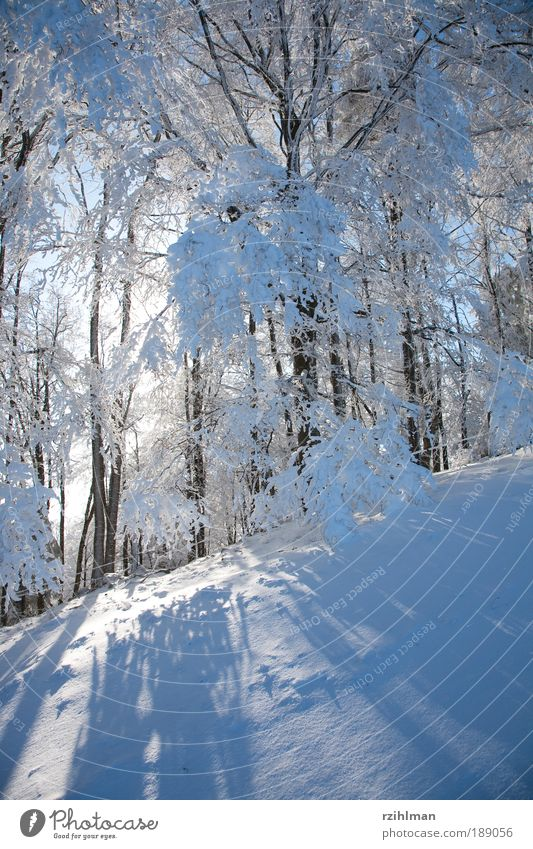 Nature White Tree Sun Calm Winter Forest Cold Snow Landscape Dream Feasts & Celebrations Frost Exterior shot Colour photo
