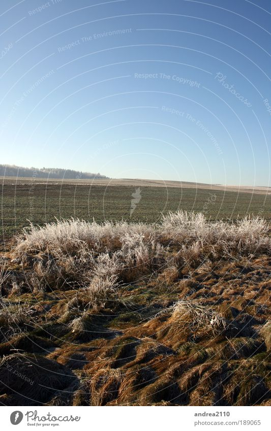 Nature Sky Sun Plant Winter Landscape Environment Earth Surrealism
