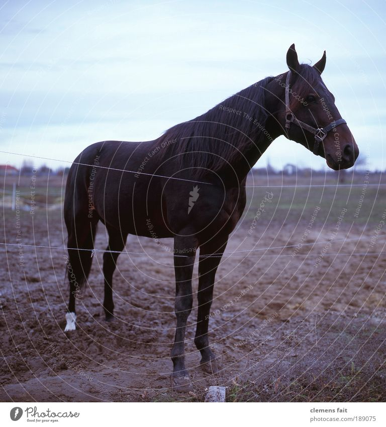 Animal Earth Horse Stand