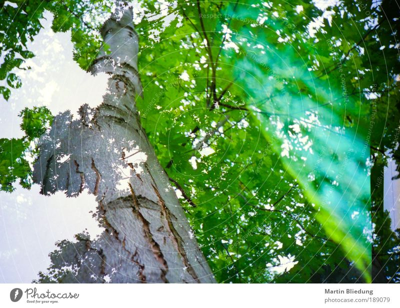 Nature White Tree Green Plant Leaf Yellow Wood Dream Brown Environment Perspective Lomography Natural Exceptional Curiosity