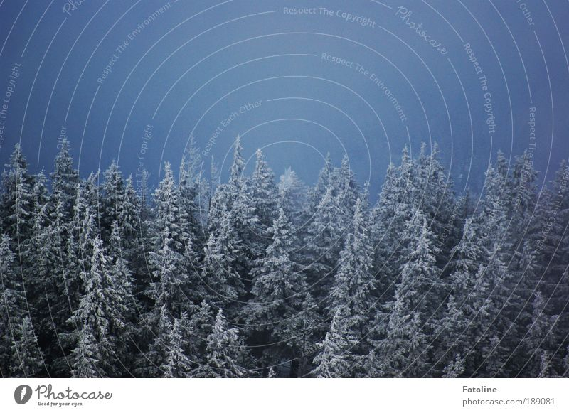 Nature Sky Tree Blue Plant Winter Forest Dark Cold Snow Mountain Landscape Air Ice Weather Environment