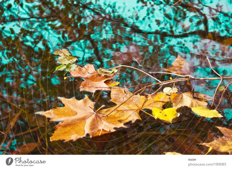 watercolour Environment Nature Landscape Water Autumn Tree Leaf Old To fall Esthetic Gold Emotions Time Autumn leaves Autumnal Seasons Deciduous forest