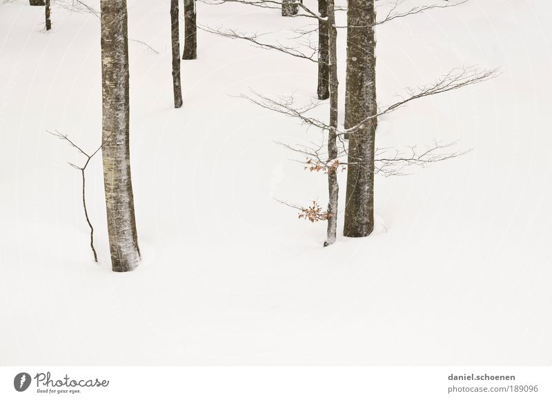 Reality! Environment Nature Plant Winter Ice Frost Snow Tree Bright White Abstract Tree trunk Branch Beech tree Deserted