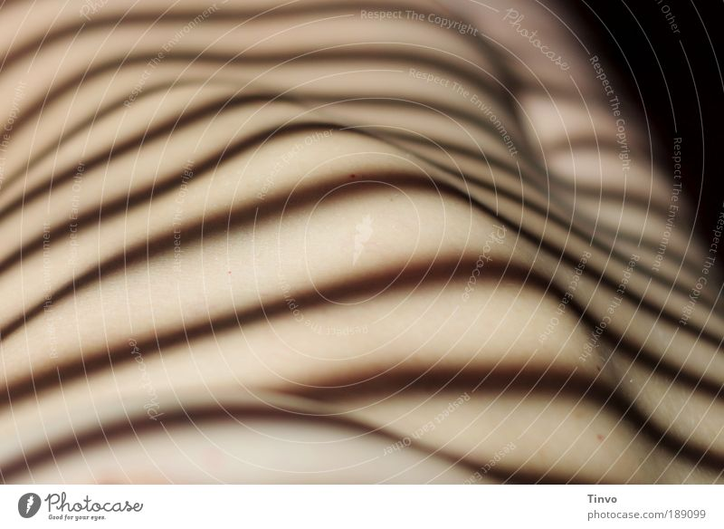Human being Beautiful Feminine Naked Body Skin Free Exceptional Esthetic Thin Striped Visual spectacle Section of image Navel Shadow play Venetian blinds