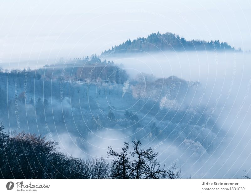 Sky Nature Plant Tree Landscape Winter Forest Mountain Environment Cold Natural Weather Fog Field Ice Bushes