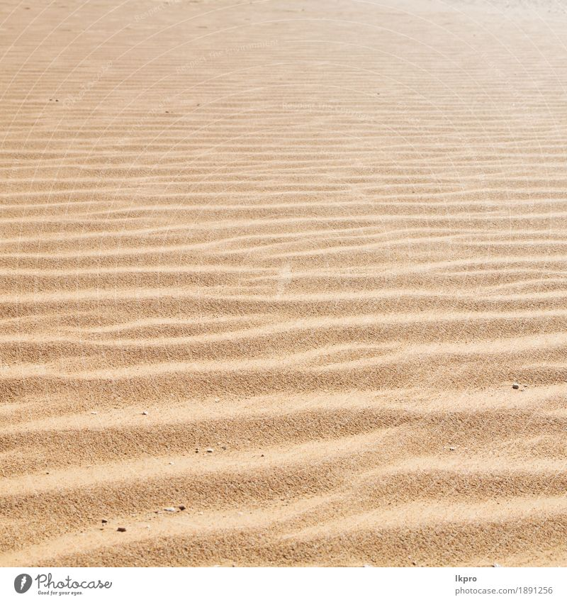 old desert and the empty quarter Design Summer Beach Ocean Environment Nature Earth Sand Climate Weather Drought Coast Hot Brown Yellow Gray Black White Death