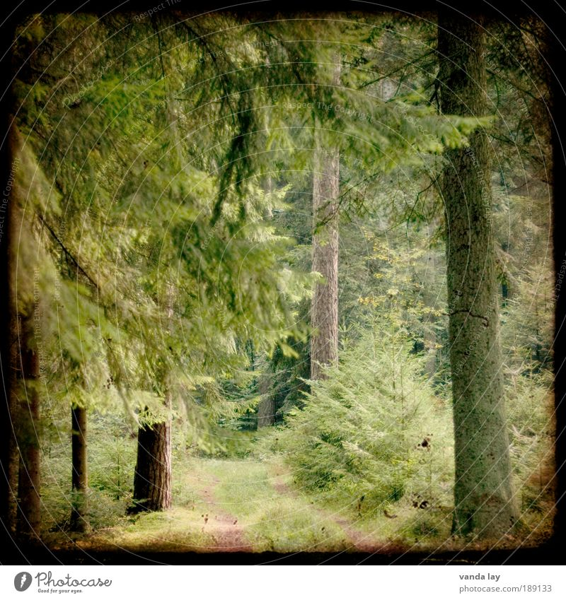 fairytale forest Environment Nature Plant Spring Summer Tree Forest Lanes & trails Old Fir tree Footpath Coniferous forest Black Forest Enchanted forest