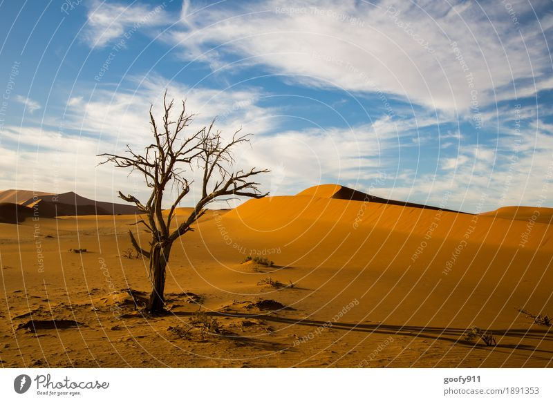 Sossusvlei (Namibia) Environment Nature Landscape Plant Animal Earth Sand Air Sky Clouds Sun Summer Autumn Beautiful weather Warmth Drought Tree Hill Desert