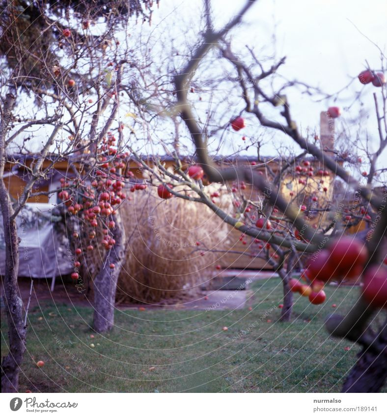 Nature Tree Environment Autumn Garden Fruit Food Leisure and hobbies Nutrition Living or residing Good Idyll Apple Pure Sign To enjoy