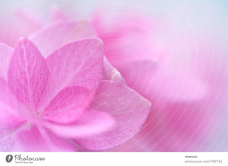 Nature Beautiful Flower Leaf Colour Relaxation Christianity Blossom Spring Agriculture Work and employment Bright Plant Odor Pink