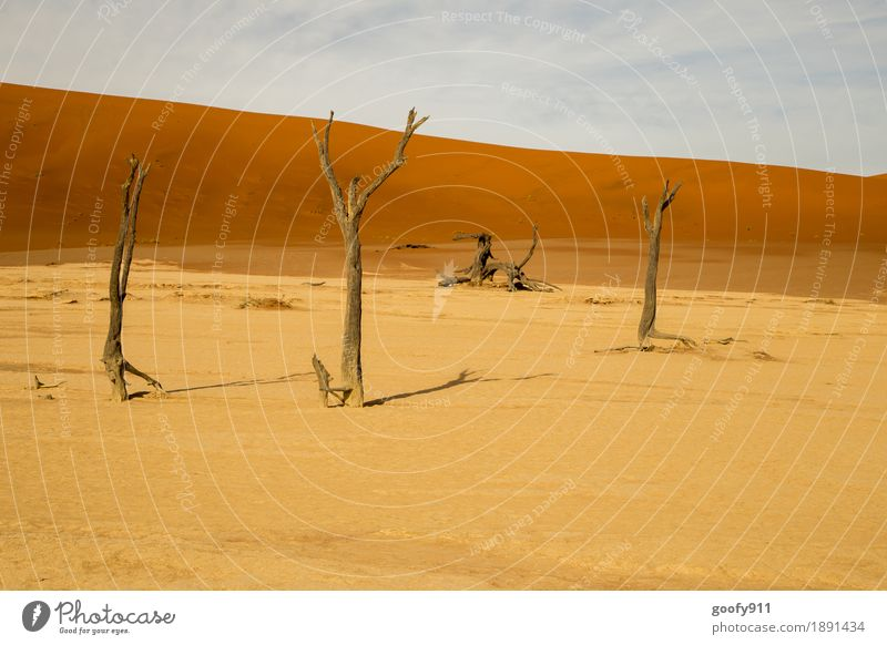 Deadvlei (Namibia) Environment Nature Landscape Plant Elements Earth Sand Air Sky Clouds Horizon Sunlight Summer Warmth Drought Tree Hill Desert Dune