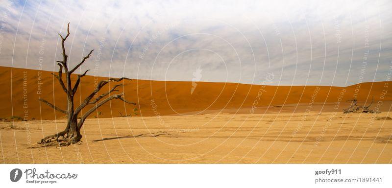 Deadvlei (Namibia) Environment Nature Landscape Plant Elements Earth Sand Air Sky Clouds Horizon Sunlight Summer Warmth Drought Tree Hill Desert Dune