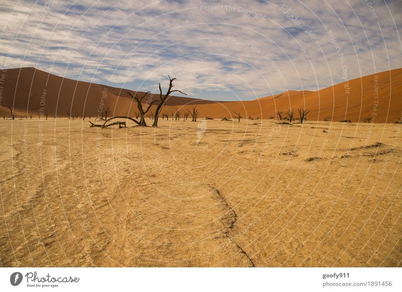 Deadvlei (Namibia) Environment Nature Landscape Plant Animal Elements Earth Sand Air Sky Clouds Horizon Sunlight Summer Warmth Drought Tree Hill Desert Dune
