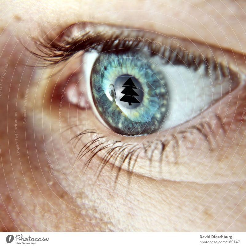 Human being Blue Christmas & Advent Green White Tree Eyes Macro (Extreme close-up) Blur Skin Circle Clarity Wrinkles Christmas tree Snapshot Fir tree