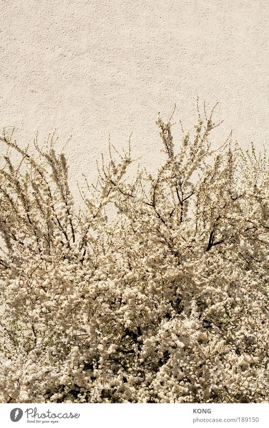 Nature White Beautiful Plant Flower Summer Emotions Blossom Spring Moody Bright Free Wild Fresh Esthetic Success