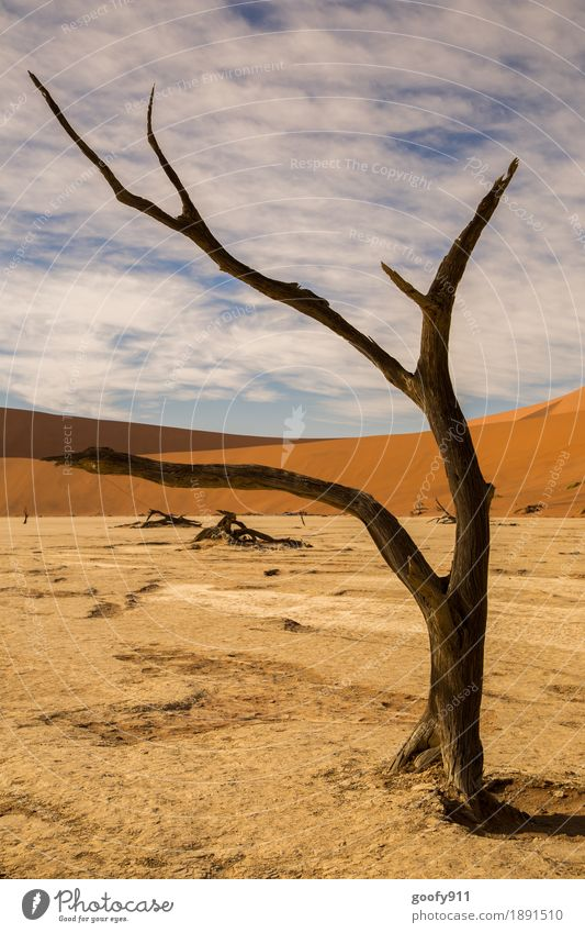 Deadvlei (Namibia) Environment Nature Landscape Plant Animal Elements Earth Sand Air Sky Clouds Sun Sunlight Summer Autumn Beautiful weather Warmth Drought Tree
