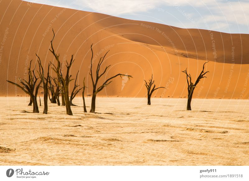 Deadvlei (Namibia) Environment Nature Landscape Plant Elements Earth Sand Air Sky Clouds Sunlight Summer Beautiful weather Warmth Drought Tree Hill Desert Dune