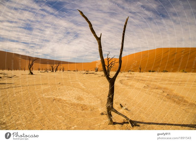Deadvlei (Namibia) Environment Nature Landscape Plant Elements Earth Sand Air Sky Clouds Horizon Sunlight Summer Beautiful weather Warmth Drought Tree Hill