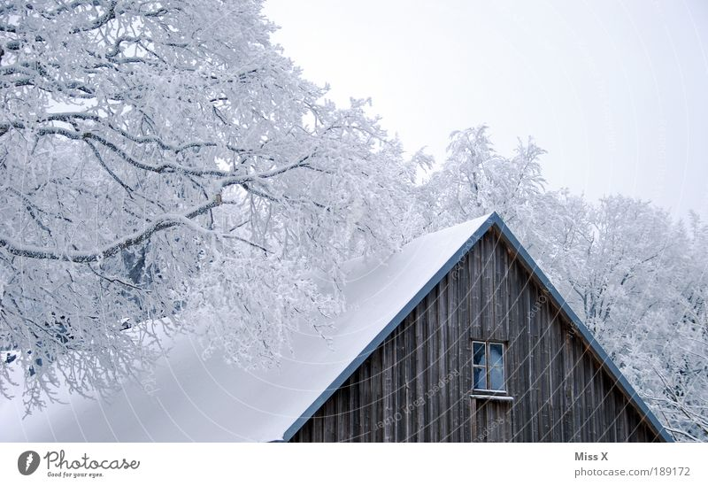 hut Vacation & Travel Trip Winter Snow Winter vacation Mountain Nature Climate Ice Frost Tree Garden Park Forest House (Residential Structure) Hut Old Cold