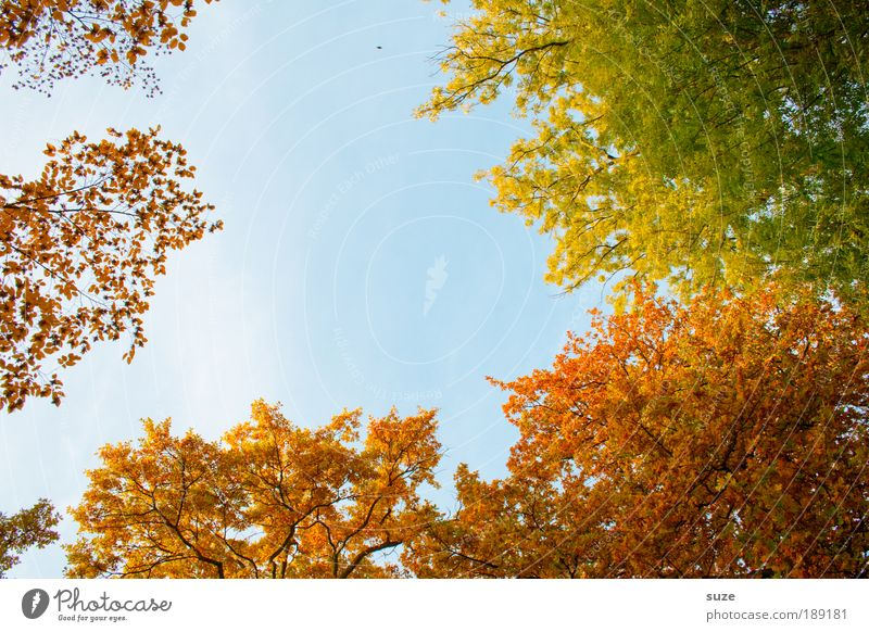 Nature Old Sky Tree Leaf Autumn Emotions Park Landscape Forest Environment Gold Time Light Esthetic To fall