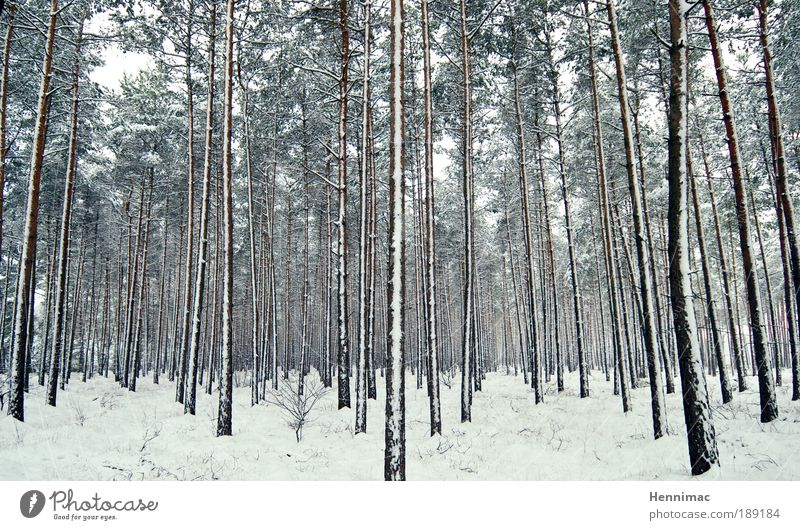 Nature White Tree Green Blue Winter Calm Loneliness Far-off places Forest Cold Snow Relaxation Freedom Wood Dream