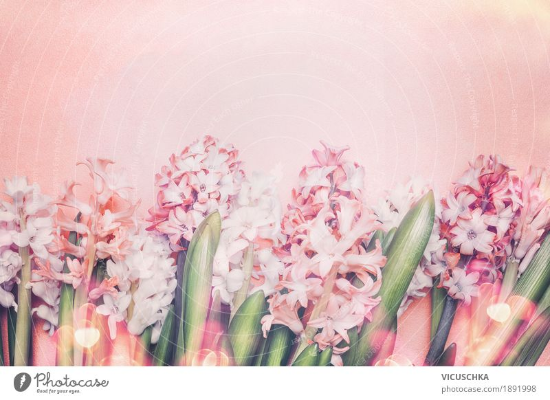 Beautiful hyacinth flowers on pastel background Style Design Summer Decoration Feasts & Celebrations Mother's Day Easter Birthday Nature Plant Spring Flower