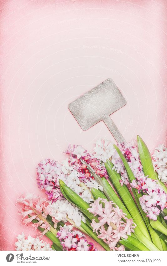 Beautiful hyacinth flowers and empty wooden shield Design Garden Nature Plant Spring Flower Leaf Blossom Blossoming Pink Style Background picture Composing