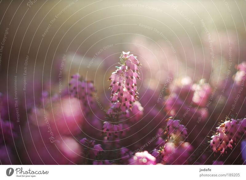 Nature Beautiful Flower Plant Back-light Relaxation Blossom Spring Happy Copy Space Park Reflection Worm's-eye view Environment Hope Esthetic