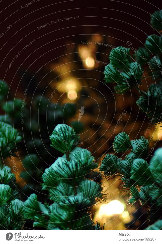 Behind Christmas Tree Nature Night sky Winter Snow Leaf Park Illuminate Dark Bright Warmth Fir tree Fir needle Twigs and branches Christmas tree Colour photo