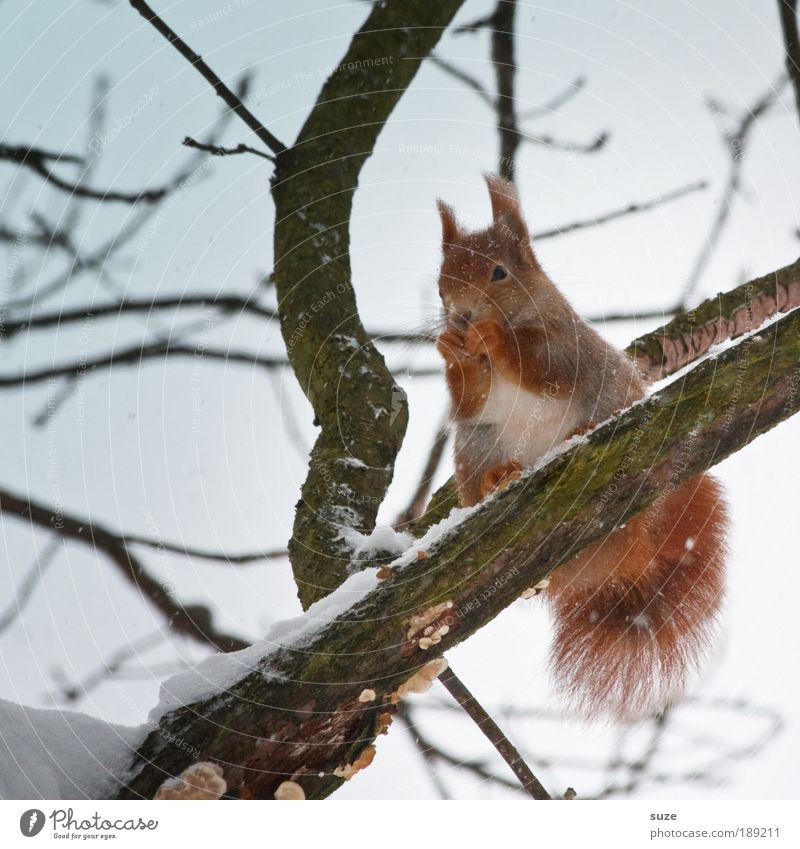 Sky Nature Tree Animal Winter Environment Cold Snow Small Air Natural Climate Sit Wild animal Authentic Elements