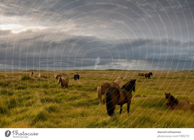 Nature Sky Summer Joy Vacation & Travel Clouds Far-off places Meadow Grass Freedom Animal Wind Weather Horse Adventure Tourism