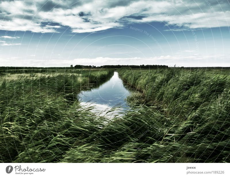 Sky Nature Plant Blue Green Water Landscape Clouds Grass Freedom Horizon Wind Climate Common Reed Brook Foliage plant