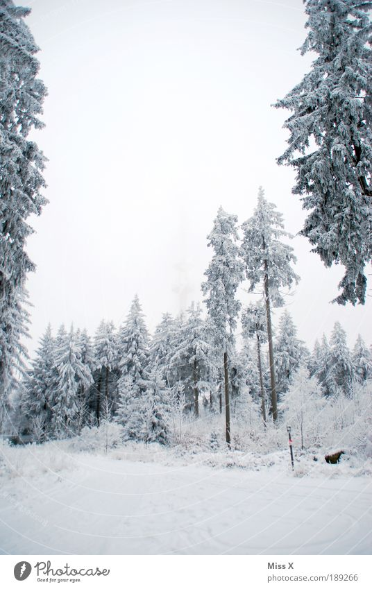 Nature White Tree Winter Vacation & Travel Clouds Forest Snow Mountain Ice Fog Weather Environment Trip Frost