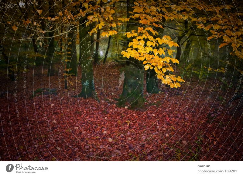 Nature Tree Red Leaf Loneliness Yellow Forest Relaxation Autumn Park Growth Change Transience Illuminate Seasons Well-being