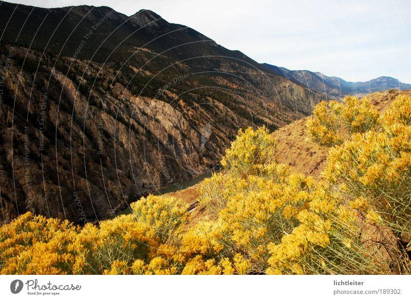 Nature Beautiful Flower Plant Far-off places Autumn Mountain Warmth Landscape Rock Bushes Uniqueness Gigantic