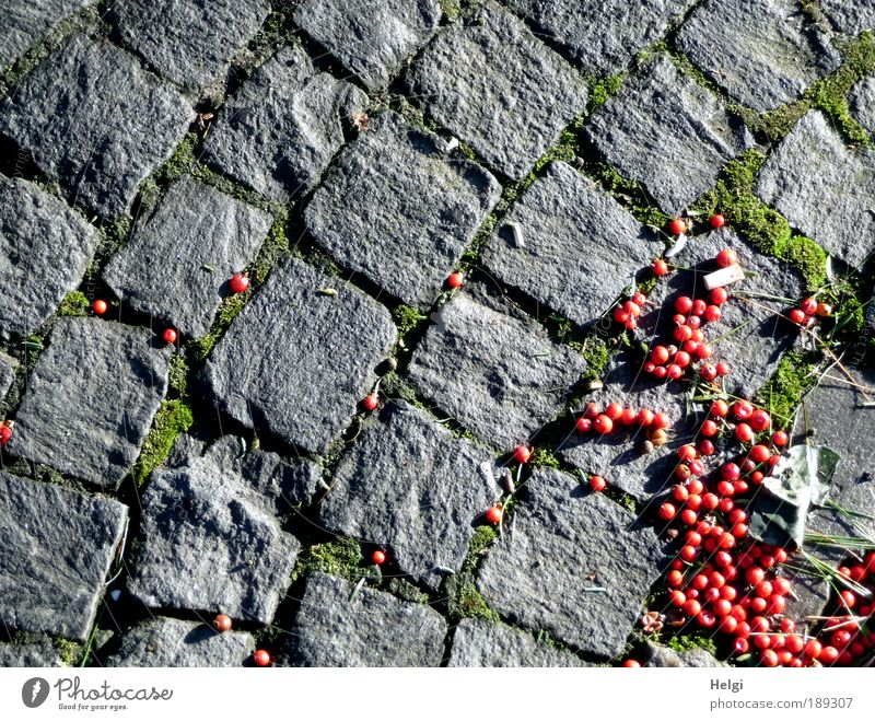 grey-red Environment Winter Beautiful weather Street Stone Lie Esthetic Small Natural Gray Green Red Bizarre Lanes & trails Paving stone Cobblestones Pavement