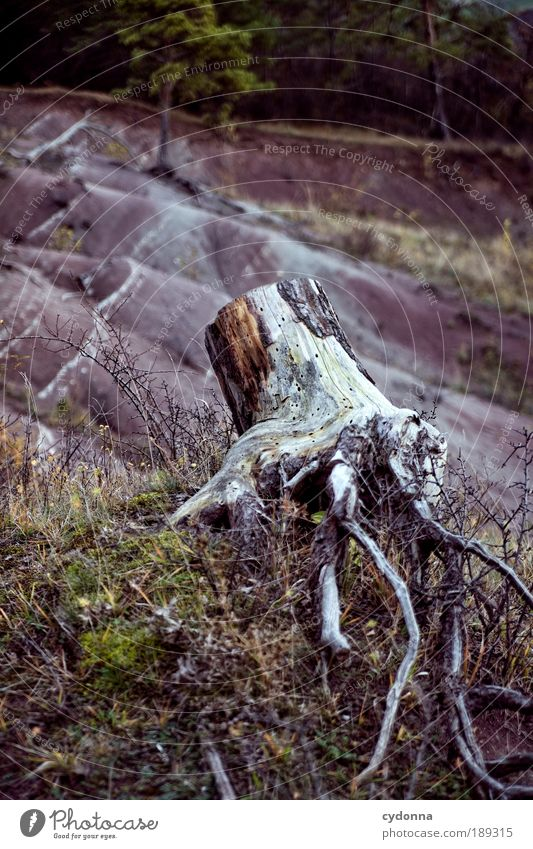Nature Tree Far-off places Environment Death Life Mountain Sadness Time Field Climate Esthetic Change Transience Hill Concern