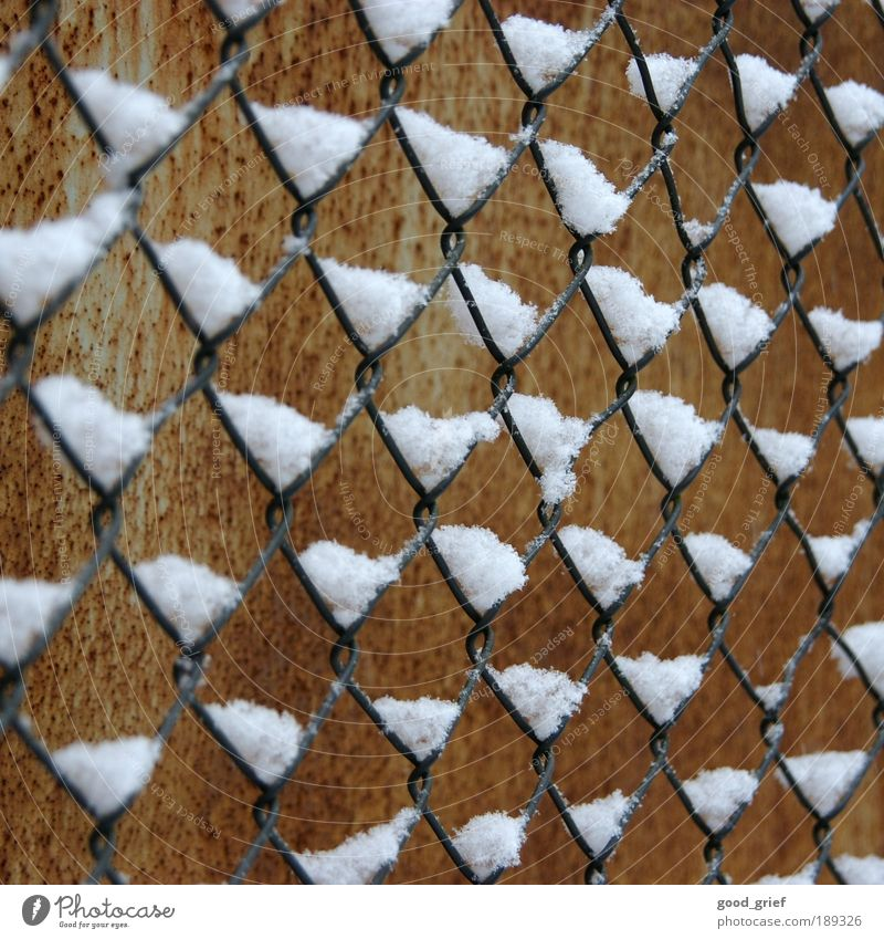 Winter Far-off places Snow Freedom Environment Brown Rust Fence Wire Tin Barrier To distance Wire netting fence Wire netting Fenced in